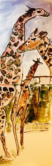 zoo - 1 (4)