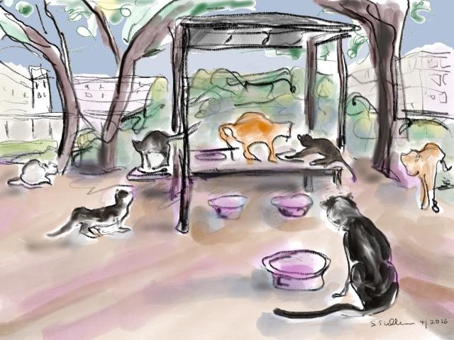 Cats at a Feeding Station, Hebrew University