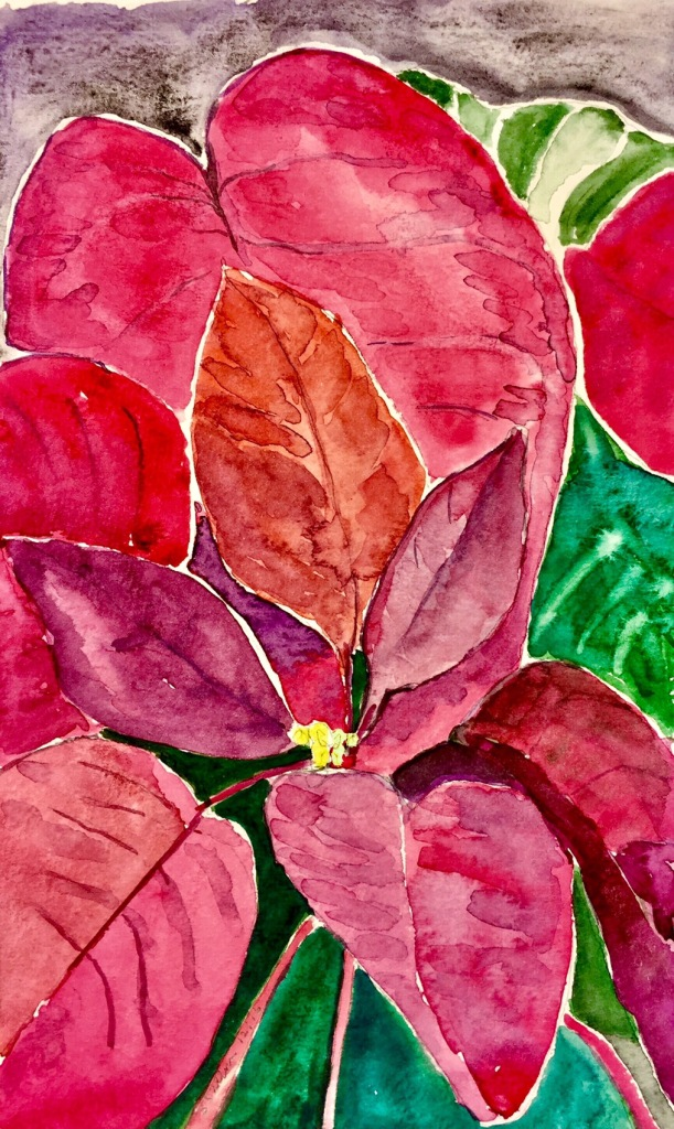 Study of a Poinsettia