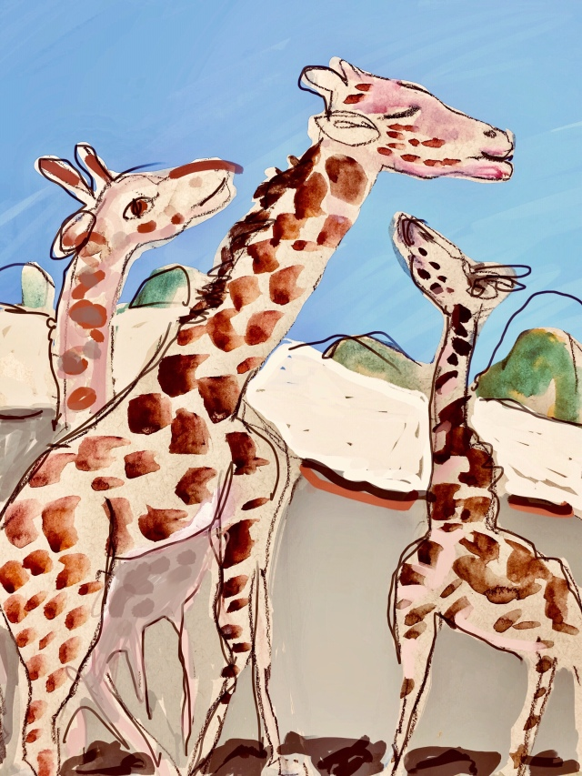 Sketch of three giraffes by Sarah Sullivan